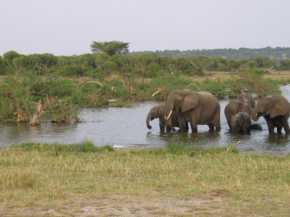 10 great reasons to visit Uganda