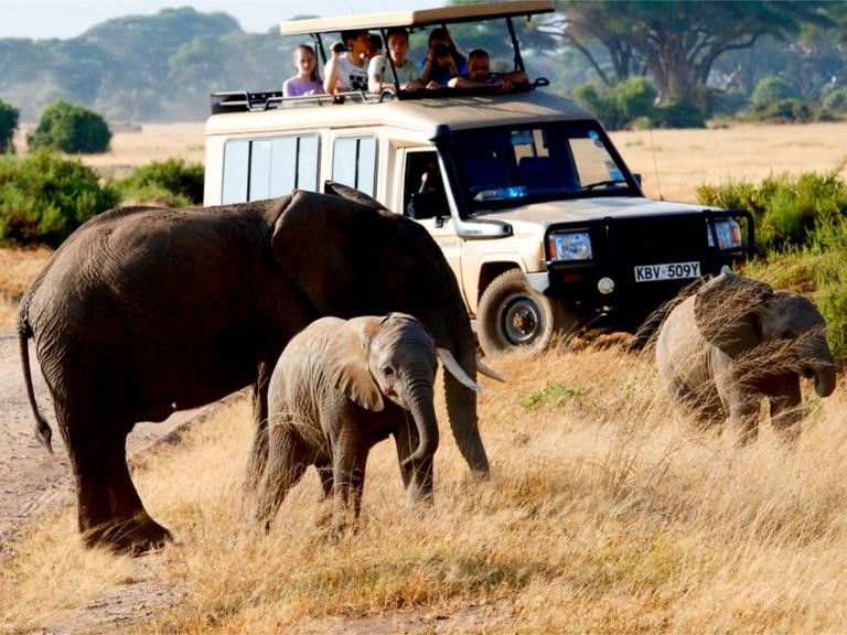 What to Expect on an African Safari for first timers2