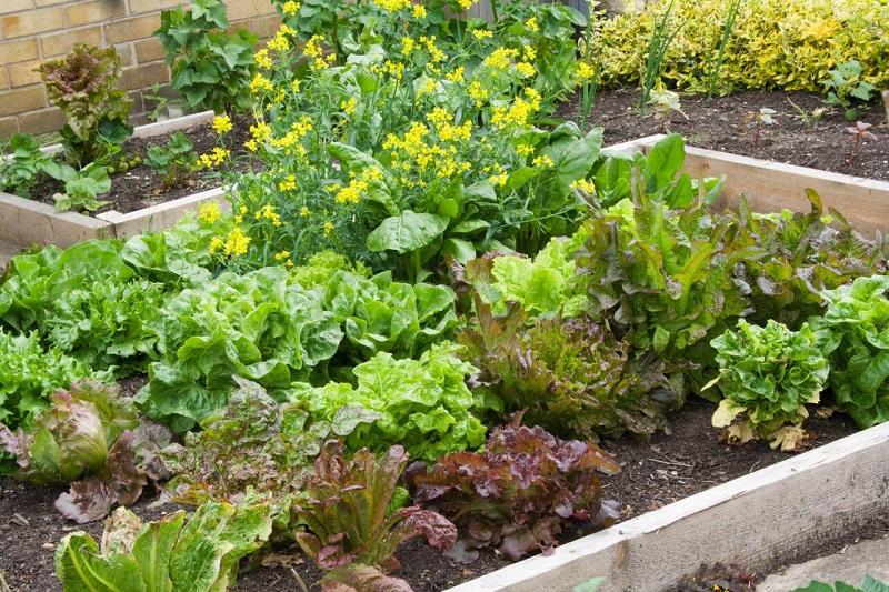 best garden design ideas