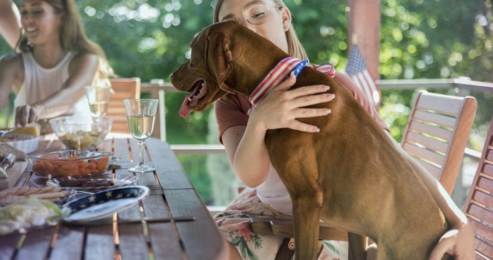 tips to protect your pet