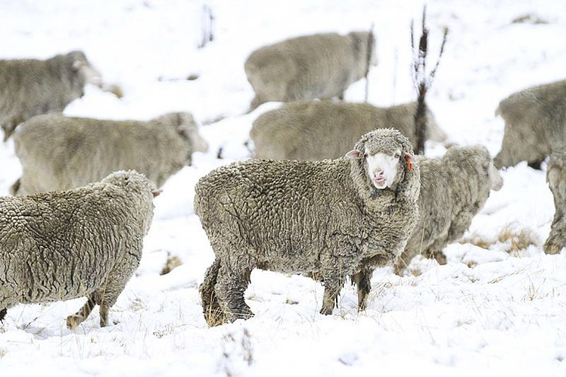 What is merino wool and what are its advantages2