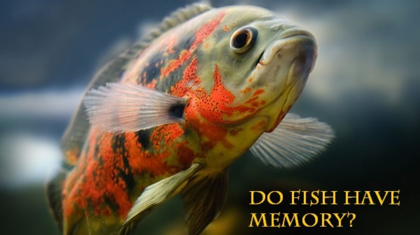 Do fish have memory?