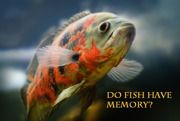 Do fish have memory