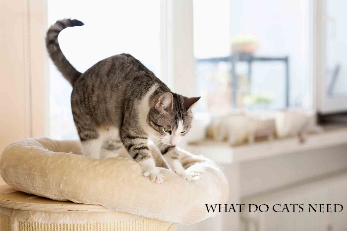 What do cats need?